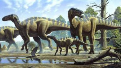 "Photo of ""البعث"" أو إعادة الحيوانات من مقبرة الانقراض"