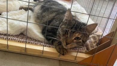 Photo of المنستير / النيابة العموميّة تأذن بإجراء أبحاثٍ عدليّة بشأن شكوى حول تعذيب قطط بمنزلٍ بالساحلين