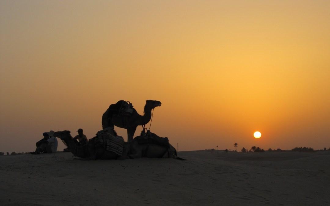 Deserto-Sarah-Tunisia-Tunisi-Cammello-Sfondo-Wallpaper-Tramonto-Sunset-Sabbia-Palme-desert