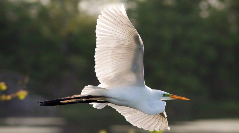 El turismo ornitológico en Pontevedra