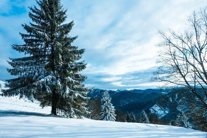 Turčianska záhradka - Lysec - krásne zasnežený strom
