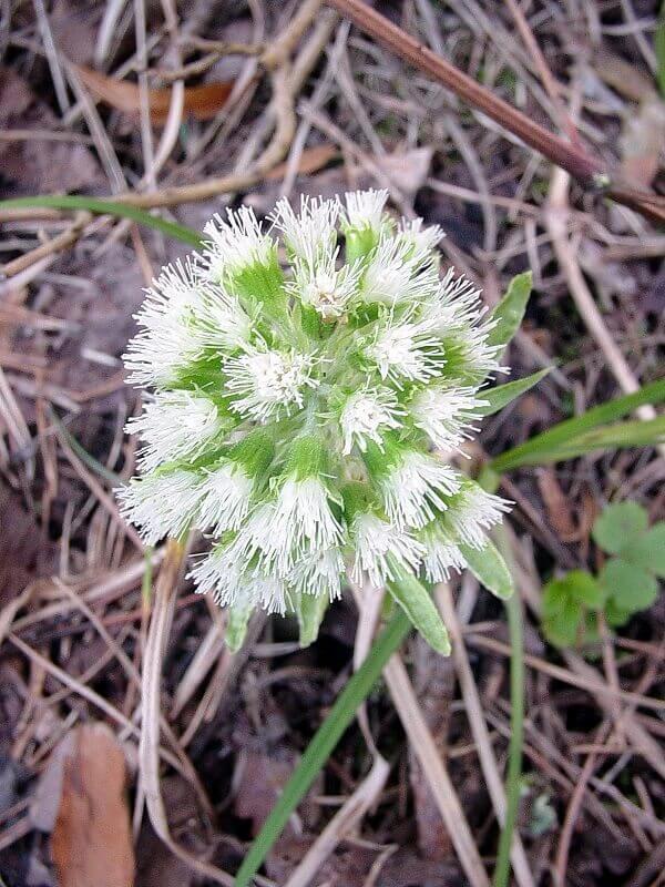 Turcianska zahradka - Flora Turca