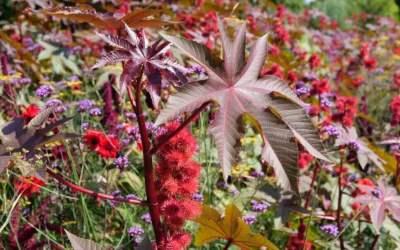 """""""Lucrezia"""" nebezpečenstvo ukryté v kráse rastlín."""