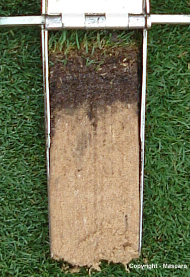 Soil Nutrient Deficiencies And Imbalances Buddy Rodgers