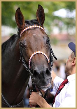 Derby Sieger Pastorius