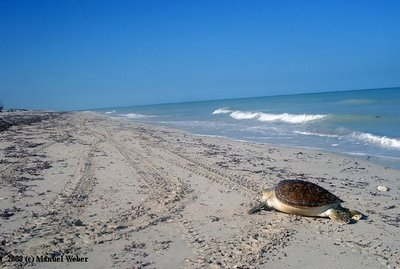 playa sabancuy, campeche