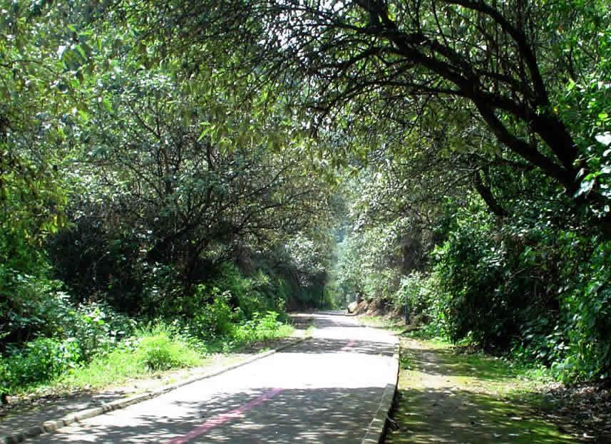 Bosque de Tlalpan, Ciudad de México