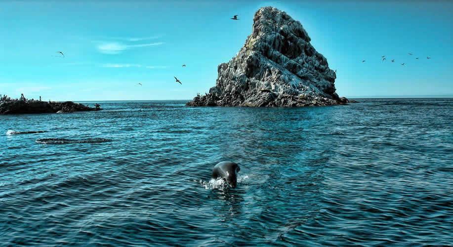 Islas San Jorge, Sonora