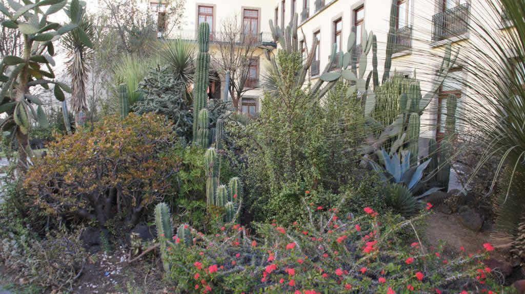 Jardín Botánico, Ciudad de México