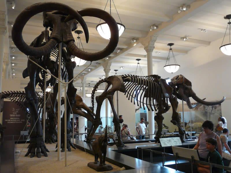 Museo de Historia Natural, Ciudad de México