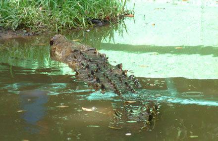 Pantanos de Centla, Tabasco