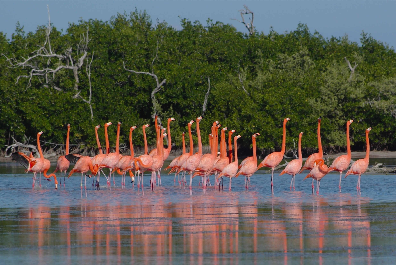 Ría Lagartos (Yucatán)