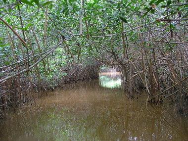 Estero Lagartos