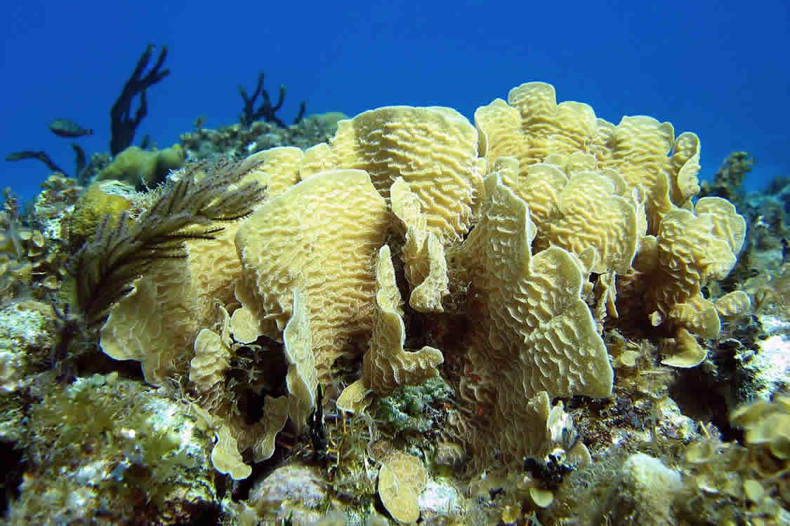 Arrecifes de Xcalak