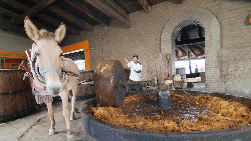 Fbricas de Mezcal en Teotitln del Valle Oaxaca  TuriMexico