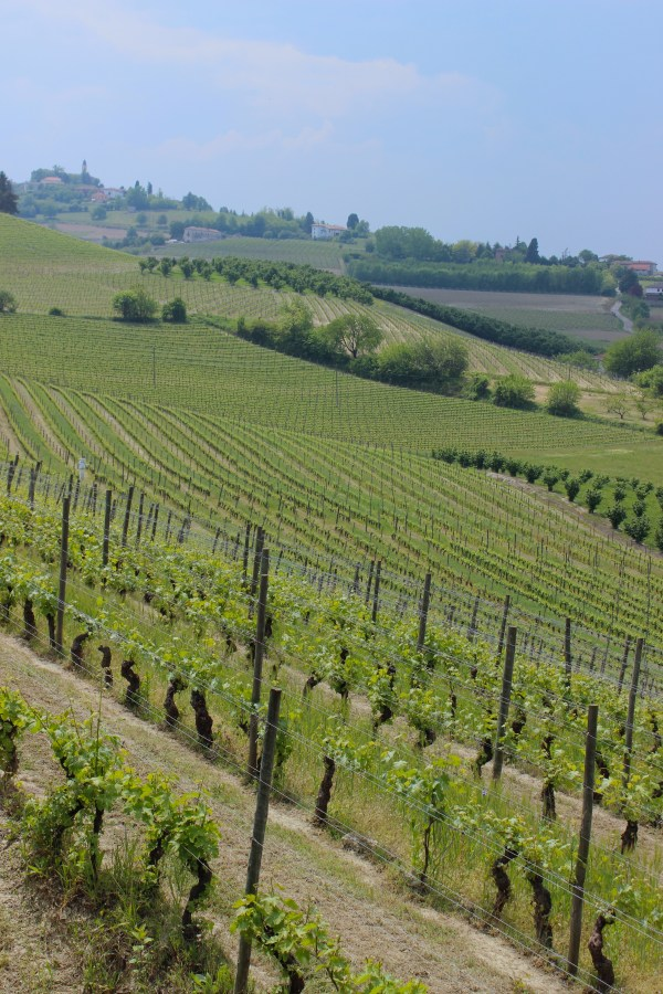 Nizza Monferrato Wine Region in Piedmont