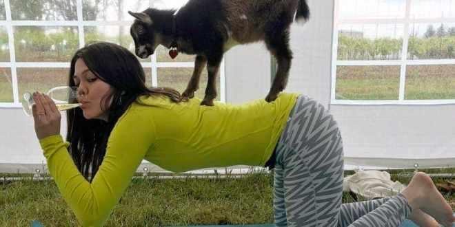 Gede yoga og vinsmagning – seriøst!