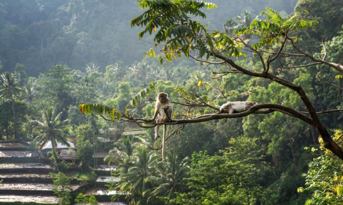 Bali e Lombok 5 cose da sapere prima di partire