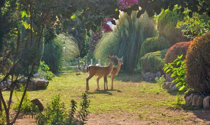 Airola piante e animali da tutto il mondo nel Giardino