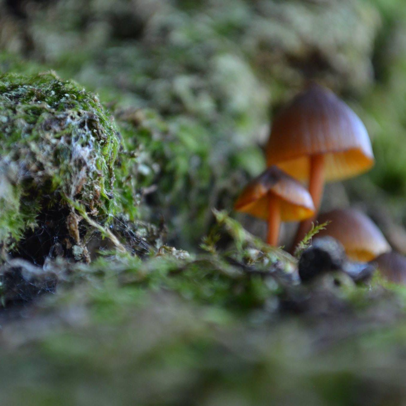 setas-en-extremadura-micologia-micoturismo