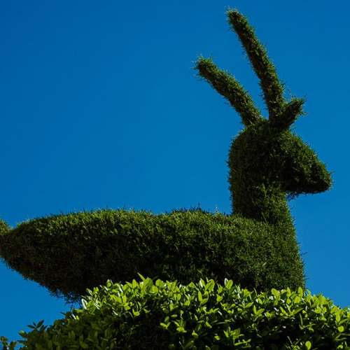 Cabra Montesa escultura vegetal de Losar de La Vera sus jardines