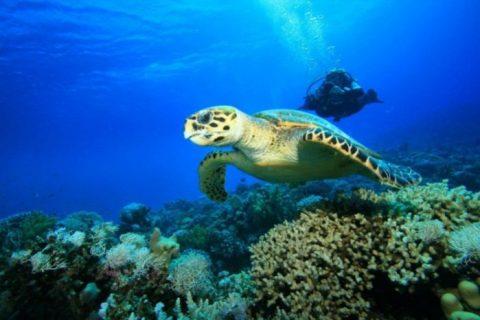 parque marinho nacional zaquintos