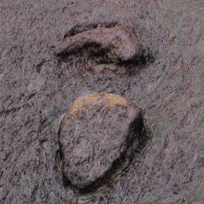 Huella mano pie Ornitópodo