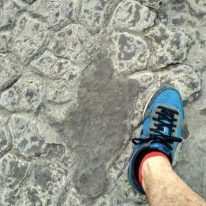 Tamaño Huella Dinosaurio