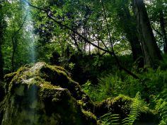 Paraje protegido de Cueva Rosa en Ribadesella