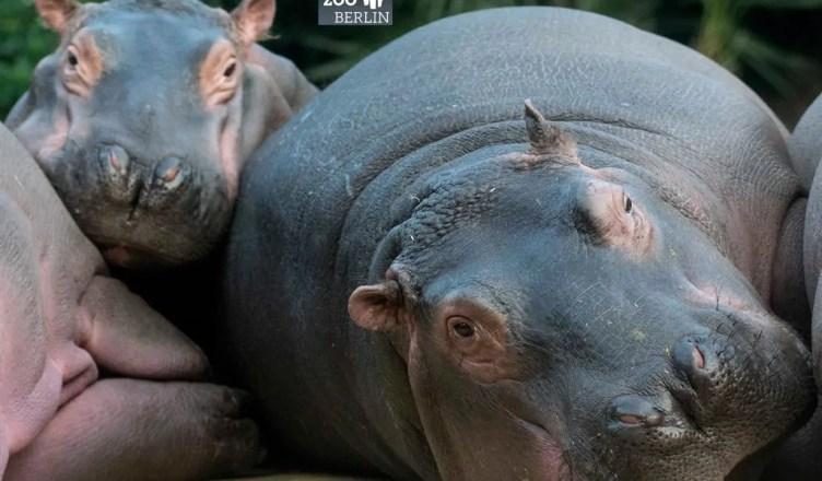 Conhecendo o Zoológico de Berlim