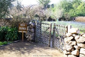 Vinicola Organica Emiliana Casablanca Chile 011 350x233 Vinícolas no Chile: Tour degustação na Emiliana