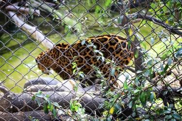 Turistando.in Chile Buin Zoo Santiago 006 375x250 O Zoológico de Buin (Buin Zoo), perto de Santiago do Chile