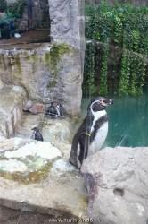 Turistando.in Chile Cerro San Cristobal Santiago 09 julho 2017 13h19 007 166x250 O Zoológico de Santiago no Parque Metropolitano