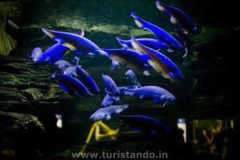 Zoo e Aquario 29nov2015 43 1024x683 O Aquário de Berlim