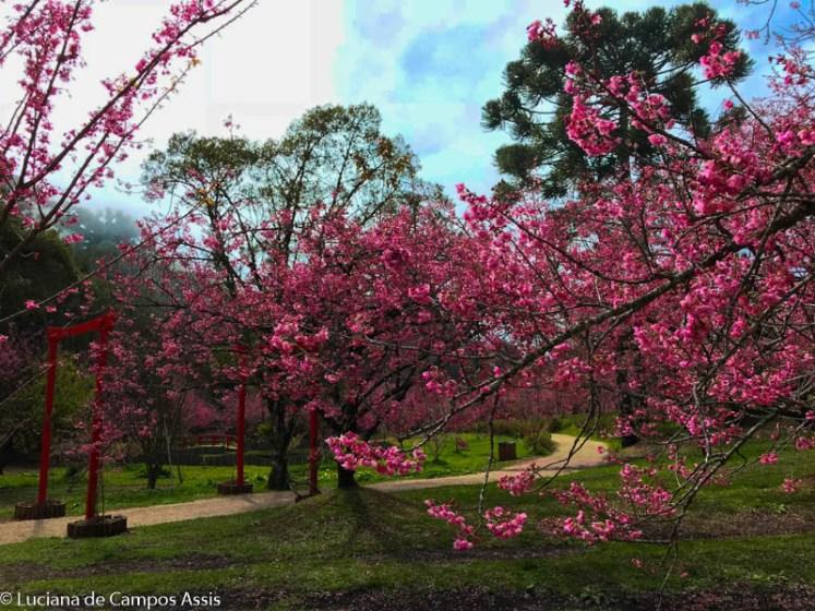 parque das cerejeiras em campos