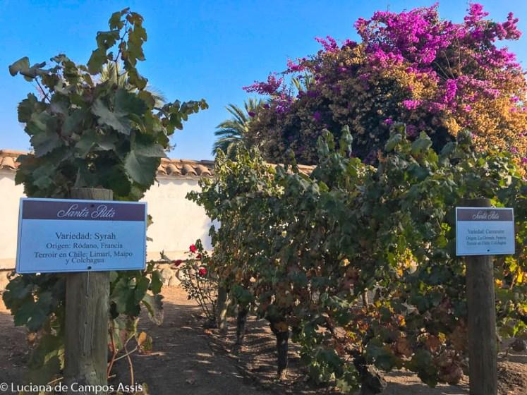 vinícola santa rita em santiago