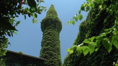 "Photo of تعرف على ""الجامع الأخضر"" المسجد تغطيه النباتات في ""أضنة"" التركية"
