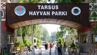 Photo of حديقة الحيوانات في طرسوس تستقبل 57 حيوانًا جديدًا