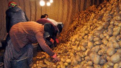 Photo of قرار بتوزيع كميات من البطاطا و البصل مجاناً