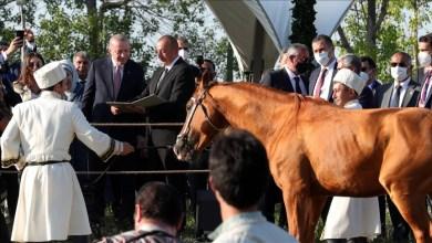 Photo of الرئيس الأذربيجاني يهدي أردوغان حصانا أصيلا
