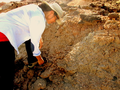 Lorraine searches the outcrop for fossils