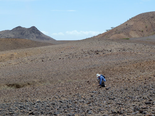 Prof Boyer searches for Miocene fossils