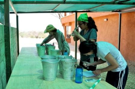Janina, Carolina and Tiffany prepare their mosquito larvae experiments.