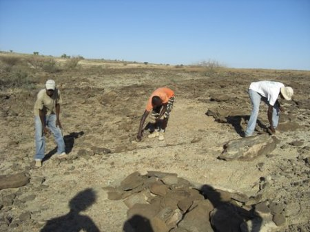 Francis, John, and Charles take a look at the site. The mound of flat stones is covering the elephant's fossil remains, keeping them safe from erosion and weathering.