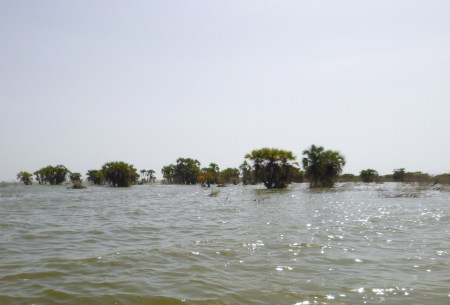 Drowned palm trees near the shores of Kalokol