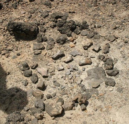 We came across this pile of fossilized bones that had been found by previous TBI field school students. Rocks were placed in a circle around the fossils in an attempt to prevent movement during the rainy season.