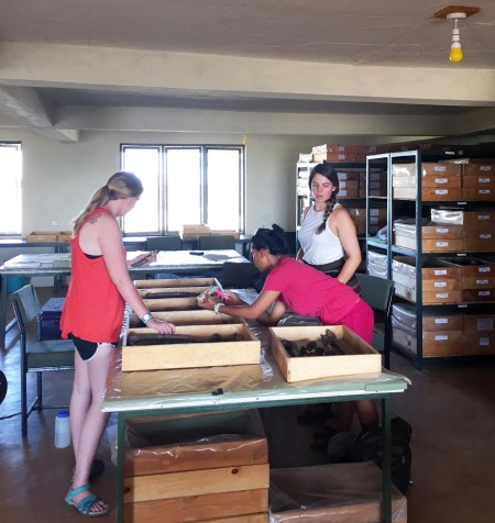 Maddie, Jen, and Adriadne work on their measurements for their group project on muscle attachment sites on the femur.