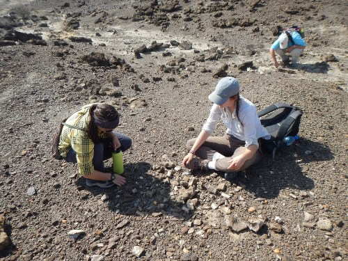 Jayde and Millie examine this group of fossils.