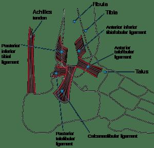 Türkçe Bilgi: Ayak Bileği