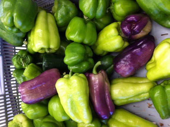 The 1st pepper harvest of the season, from our new hoop house. You should start to see peppers in your box this week.